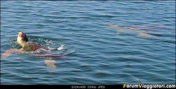 [TURCHIA - Dalyan - Escursione] Turtle Tour-01-236-close-up.jpg