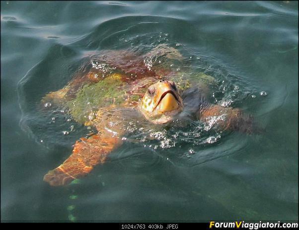 [TURCHIA - Dalyan - Escursione] Turtle Tour-01-241-close-up.jpg
