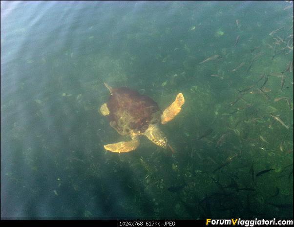 [TURCHIA - Dalyan - Escursione] Turtle Tour-img00994-20120801-0927.jpg