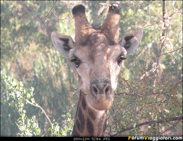 il Kruger Park:2012
