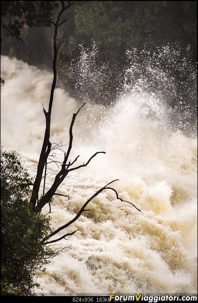 Zambia, Zimbabwe, Botswana..e anche un po' di Dubai: anteprima foto-_dsc0439.jpg