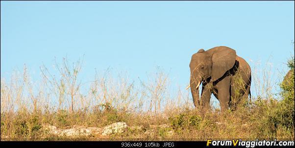 Zambia, Zimbabwe, Botswana..e anche un po' di Dubai: anteprima foto-_dsc0655.jpg