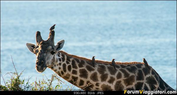 Zambia, Zimbabwe, Botswana..e anche un po' di Dubai: anteprima foto-_dsc0680.jpg