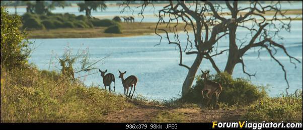 Zambia, Zimbabwe, Botswana..e anche un po' di Dubai: anteprima foto-_dsc0691.jpg