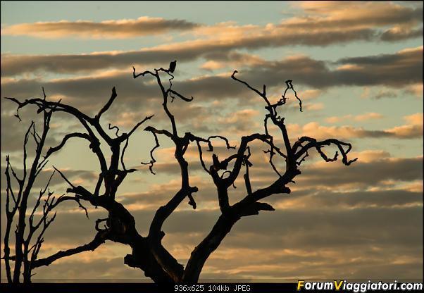 Zambia, Zimbabwe, Botswana..e anche un po' di Dubai: anteprima foto-_dsc0716.jpg