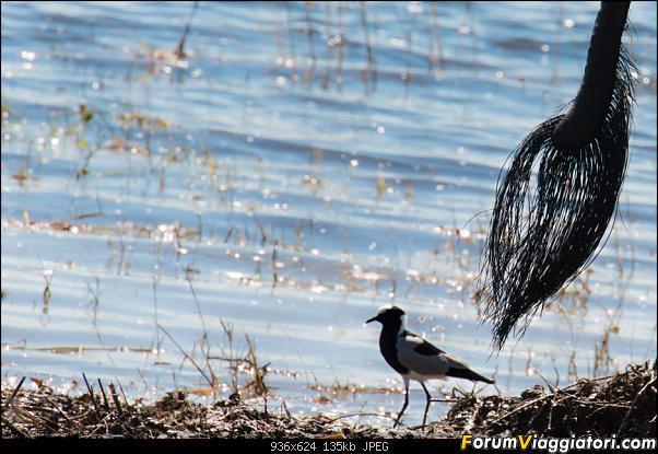 Zambia, Zimbabwe, Botswana..e anche un po' di Dubai: anteprima foto-_dsc0811.jpg