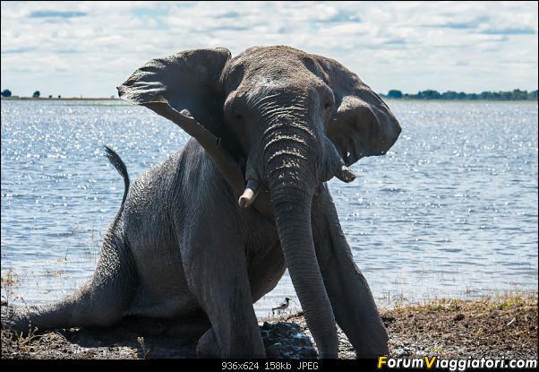 Zambia, Zimbabwe, Botswana..e anche un po' di Dubai: anteprima foto-_dsc0816.jpg