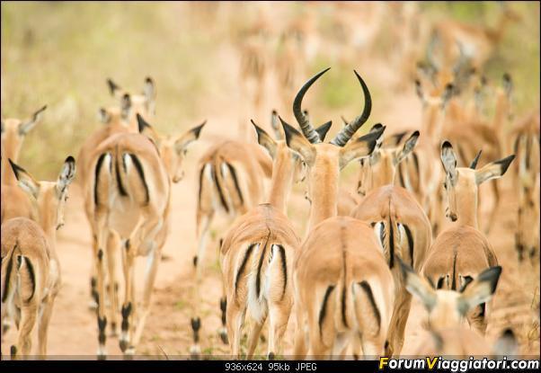 Zambia, Zimbabwe, Botswana..e anche un po' di Dubai: anteprima foto-_dsc0927.jpg