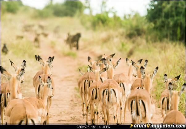 Zambia, Zimbabwe, Botswana..e anche un po' di Dubai: anteprima foto-_dsc0931.jpg