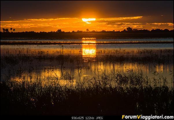 Zambia, Zimbabwe, Botswana..e anche un po' di Dubai: anteprima foto-_dsc0957.jpg