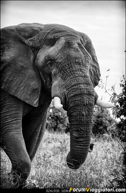 Zambia, Zimbabwe, Botswana..e anche un po' di Dubai: anteprima foto-_dsc1041_bn.jpg