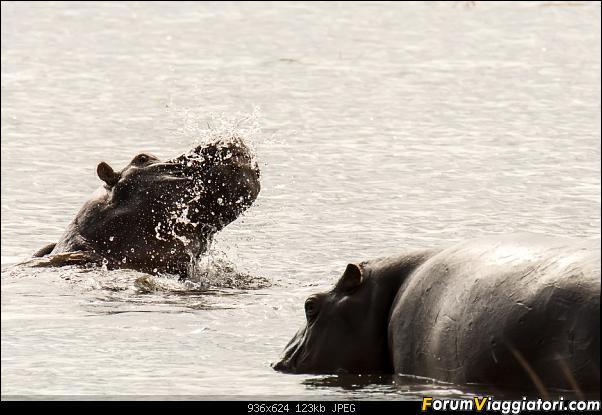 Zambia, Zimbabwe, Botswana..e anche un po' di Dubai: anteprima foto-_dsc1180.jpg