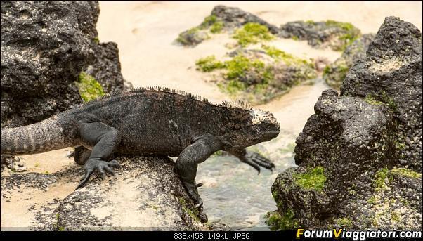 Neve, lava e ...bestioline: Ecuador e Galapagos, un po' di foto in anteprima-_dsc2609.jpg