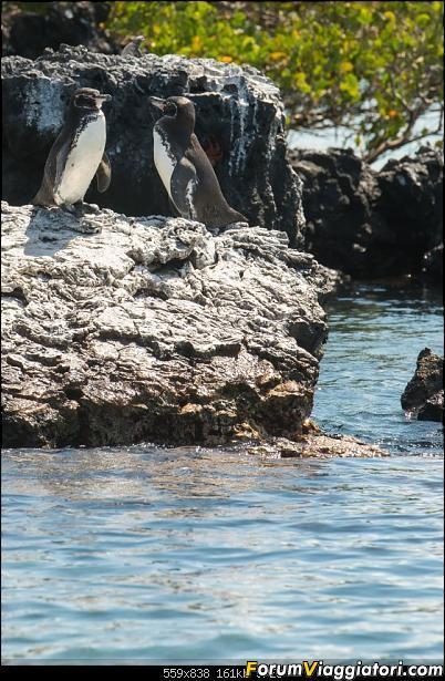Neve, lava e ...bestioline: Ecuador e Galapagos, un po' di foto in anteprima-_dsc2716.jpg