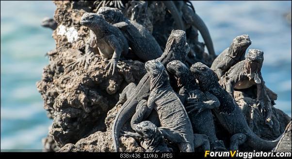 Neve, lava e ...bestioline: Ecuador e Galapagos, un po' di foto in anteprima-_dsc2777.jpg