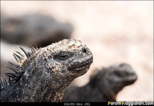 Neve, lava e ...bestioline: Ecuador e Galapagos, un po' di foto in anteprima-_dsc3013.jpg