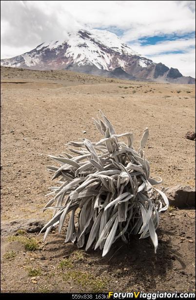 Neve, lava e ...bestioline: Ecuador e Galapagos, un po' di foto in anteprima-dsc_6723.jpg