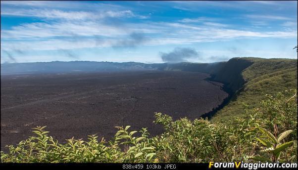 Neve, lava e ...bestioline: Ecuador e Galapagos, un po' di foto in anteprima-dsc_6779.jpg