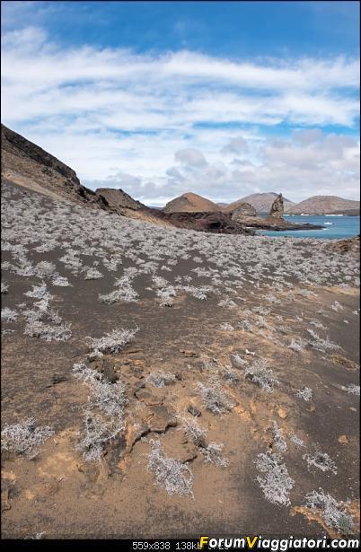Neve, lava e ...bestioline: Ecuador e Galapagos, un po' di foto in anteprima-dsc_6811.jpg
