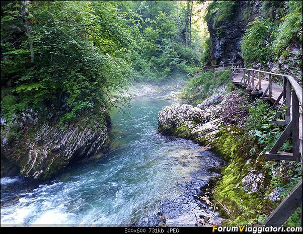 Slovenia, polmone verde d'Europa-270-p1800034.jpg