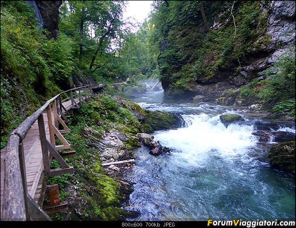 Slovenia, polmone verde d'Europa-271-p1800037.jpg