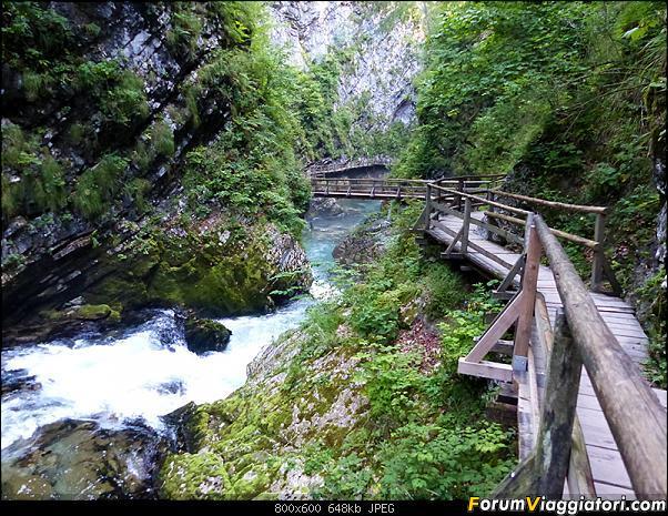 Slovenia, polmone verde d'Europa-274-p1800059.jpg