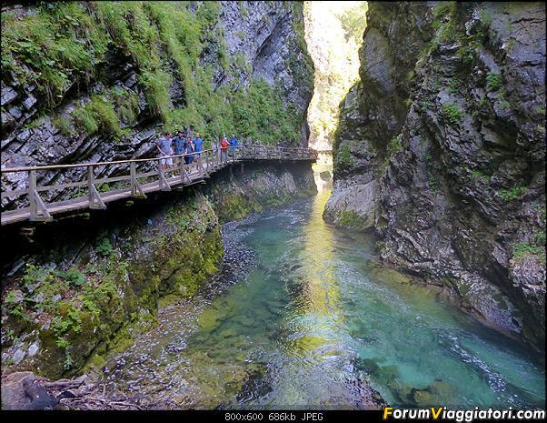 Slovenia, polmone verde d'Europa-277-p1800089.jpg