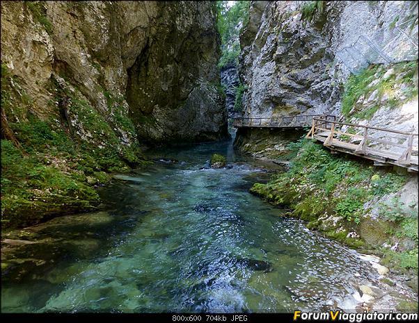 Slovenia, polmone verde d'Europa-279-p1800106.jpg