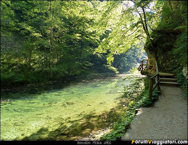 Slovenia, polmone verde d'Europa-281-p1800118.jpg