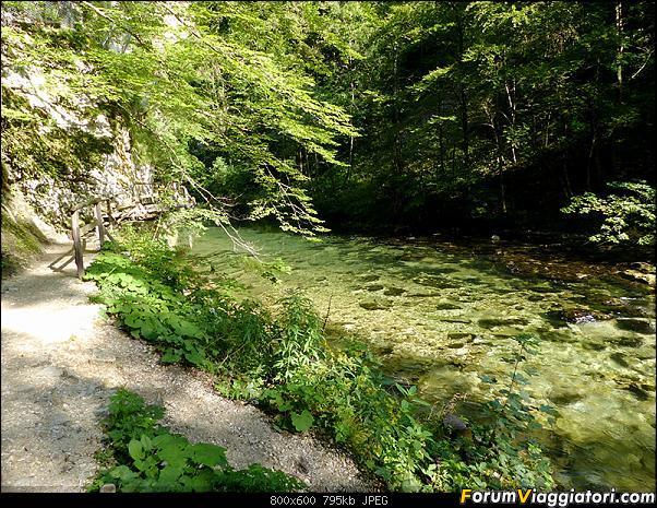 Slovenia, polmone verde d'Europa-282-p1800122.jpg
