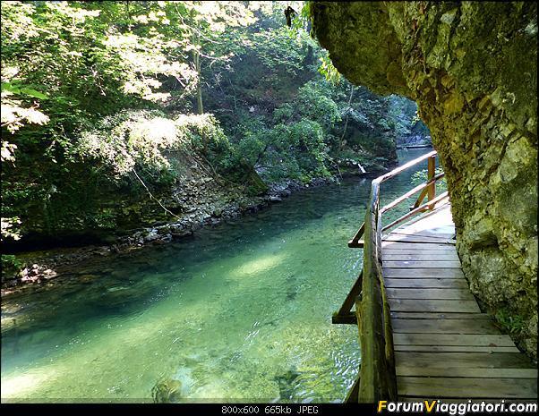 Slovenia, polmone verde d'Europa-289-p1800189.jpg