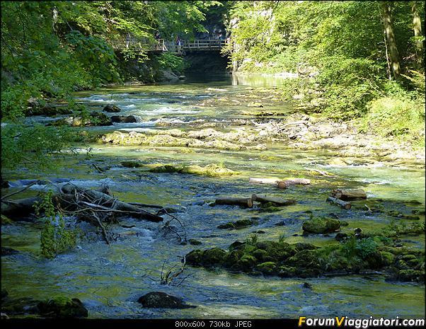 Slovenia, polmone verde d'Europa-291-p1800244.jpg