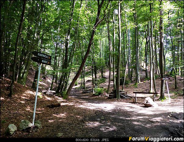 Slovenia, polmone verde d'Europa-315-p1800482.jpg