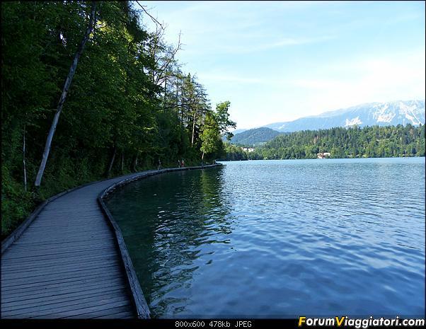 Slovenia, polmone verde d'Europa-319-p1800510.jpg