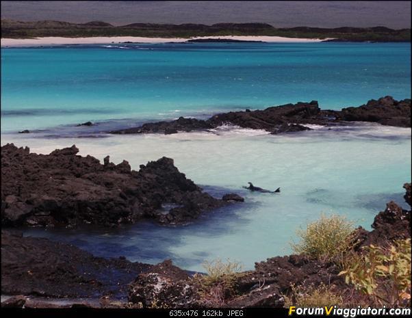 [ECUADOR - Galapagos - Escursione] Leon Dormido (Kicker Rock) daily tour-12.jpg