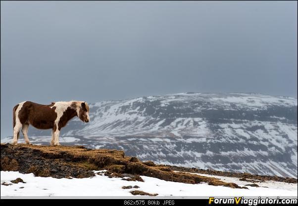 Doppia Islanda on ice...due viaggi in inverno-dsc_1139.jpg