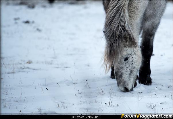 Doppia Islanda on ice...due viaggi in inverno-dsc_7908.jpg