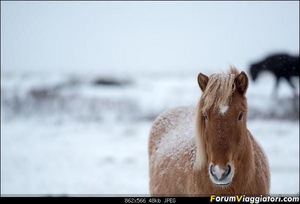 Doppia Islanda on ice...due viaggi in inverno-dsc_7912.jpg