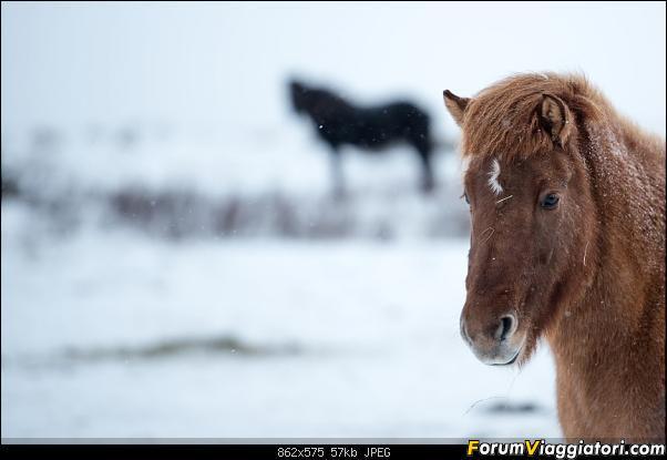 Doppia Islanda on ice...due viaggi in inverno-dsc_7917.jpg