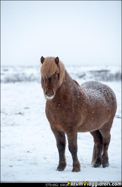 Doppia Islanda on ice...due viaggi in inverno-dsc_7922.jpg
