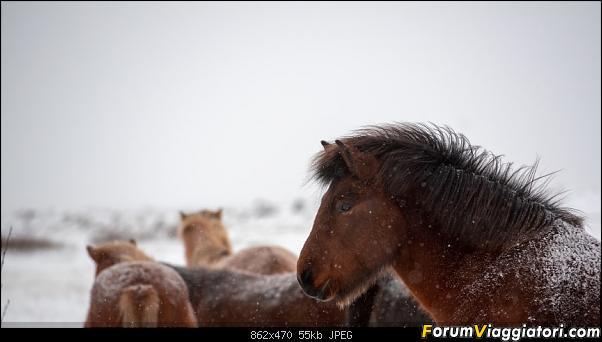 Doppia Islanda on ice...due viaggi in inverno-dsc_7924.jpg