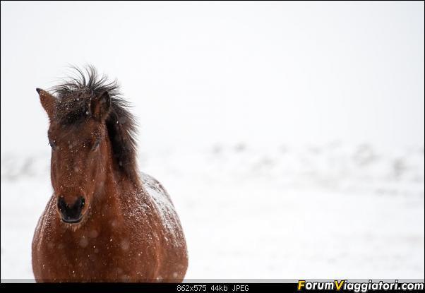 Doppia Islanda on ice...due viaggi in inverno-dsc_7928.jpg