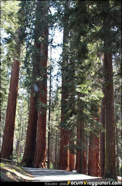 California, Land of Glittering Dreams (2018)-34img_0017.jpg