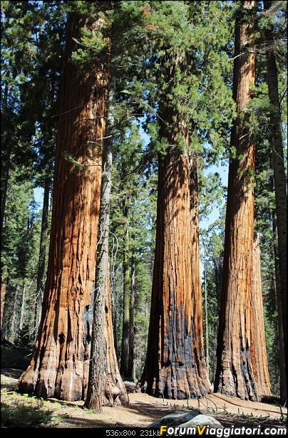 California, Land of Glittering Dreams (2018)-38img_0027.jpg