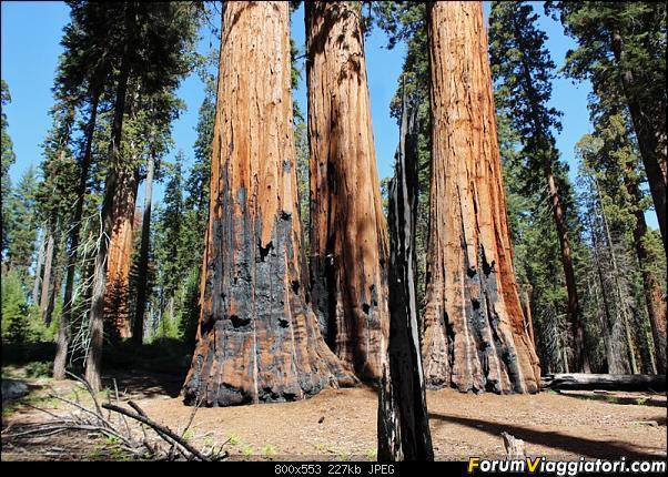 California, Land of Glittering Dreams (2018)-39img_0980.jpg