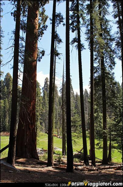 California, Land of Glittering Dreams (2018)-47img_0034.jpg