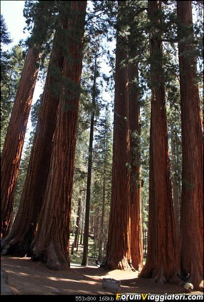 California, Land of Glittering Dreams (2018)-48img_1002.jpg