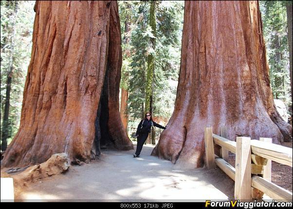 California, Land of Glittering Dreams (2018)-66img_1038.jpg