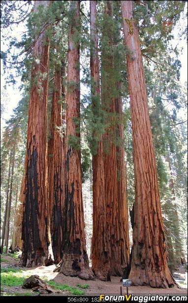 California, Land of Glittering Dreams (2018)-86img_0093.jpg