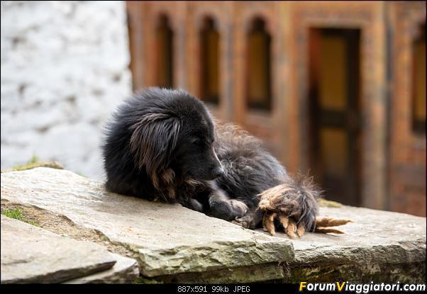 L'ultimo regno buddista: primi appunti e foto di un viaggio in Bhutan-dsc_0508.jpg